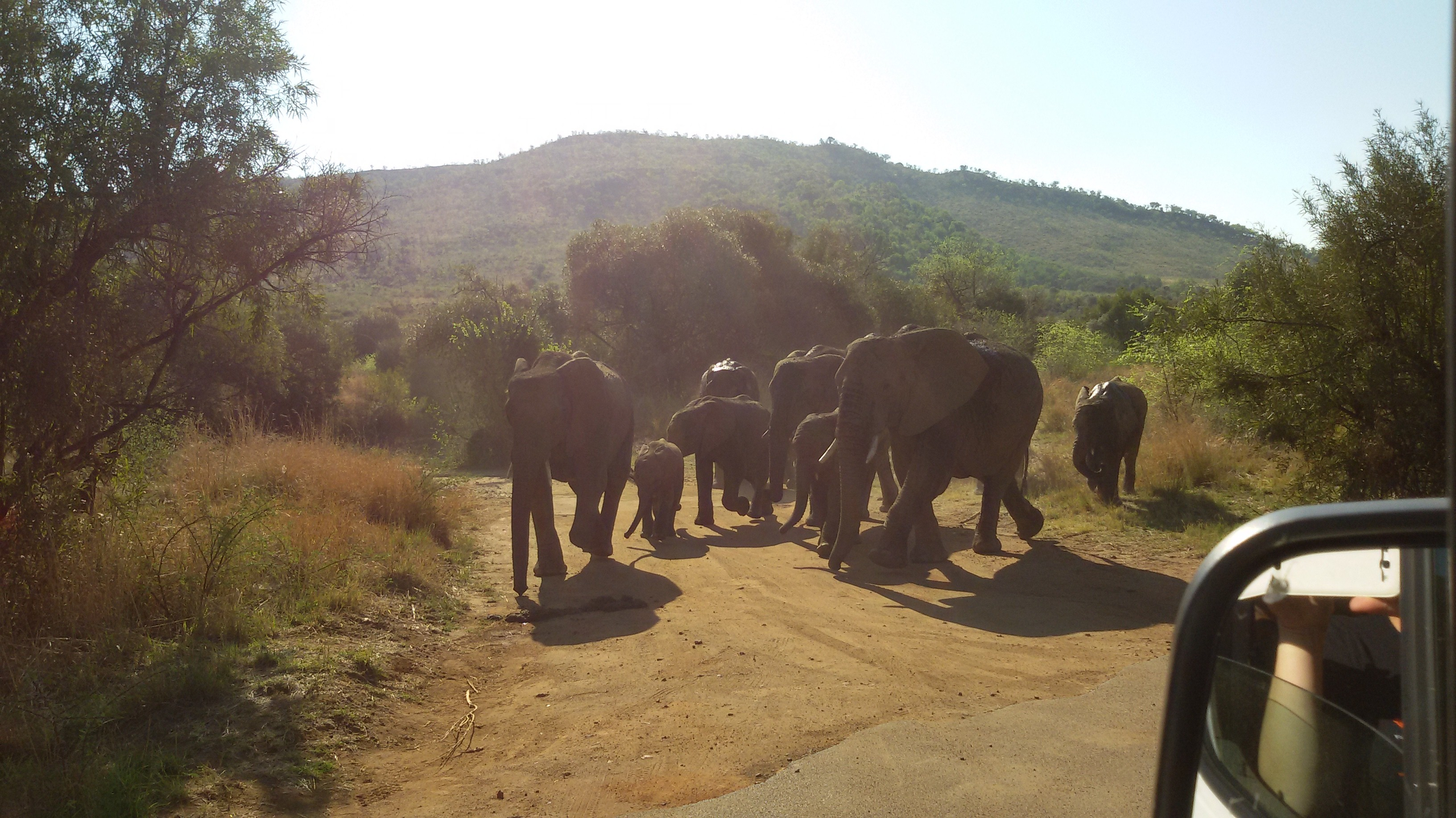 Elefanten in Pilanesberg - SafariScout Südafrika Wildlife Tour