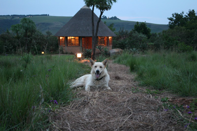 Budget Lodge für Wander Safari: Inkosana Lodge in Südafrika