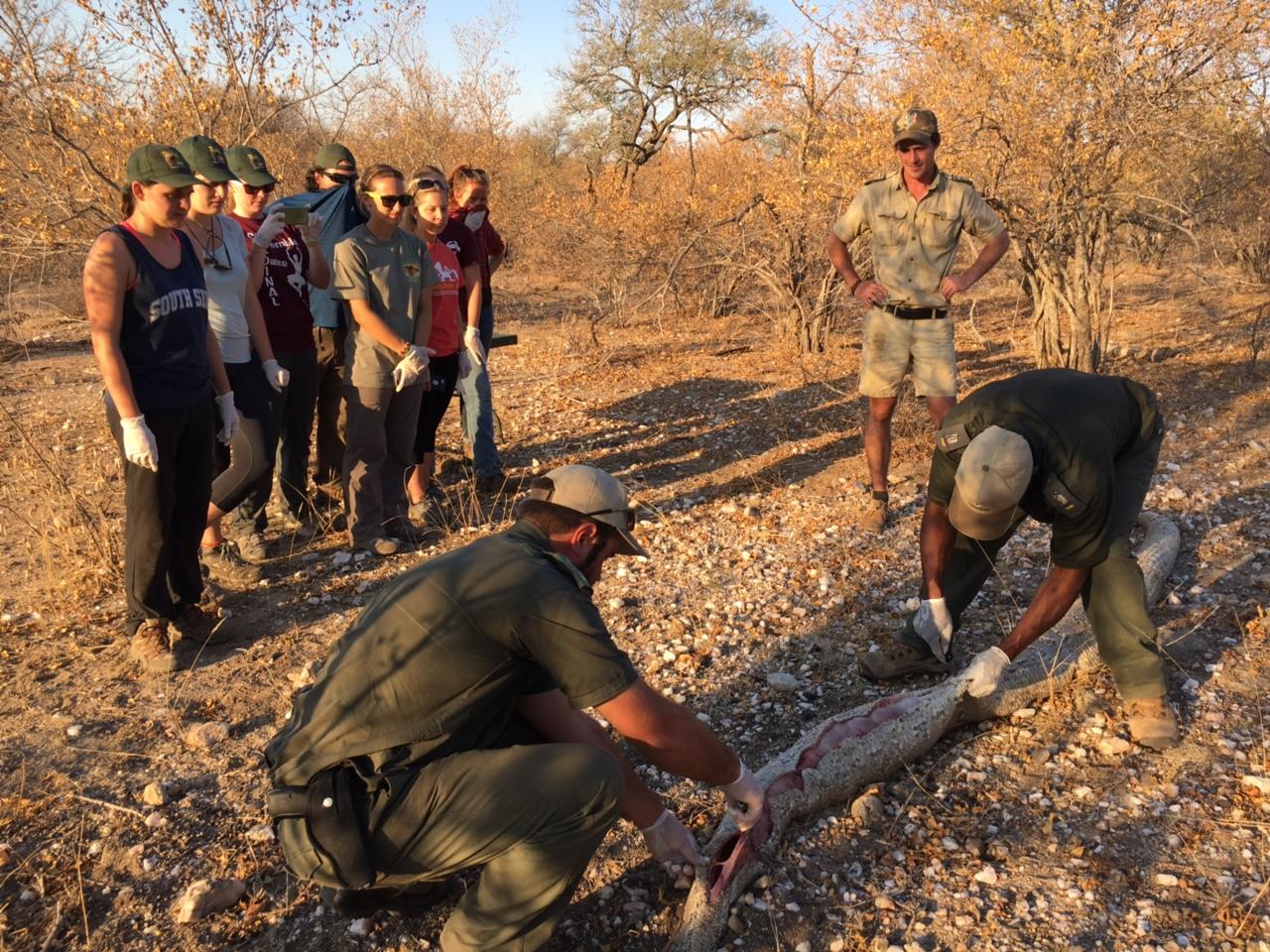 Freiwilligen Projekt in Afrikas Busch: Lektion im Krüger Park Südafrikas
