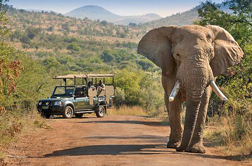 Pilanesberg - Safari Alternative zu Südafrikas Kruger Nationalpark