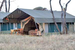 Komfortables Zelt Camp in der Serengeti Afrikas