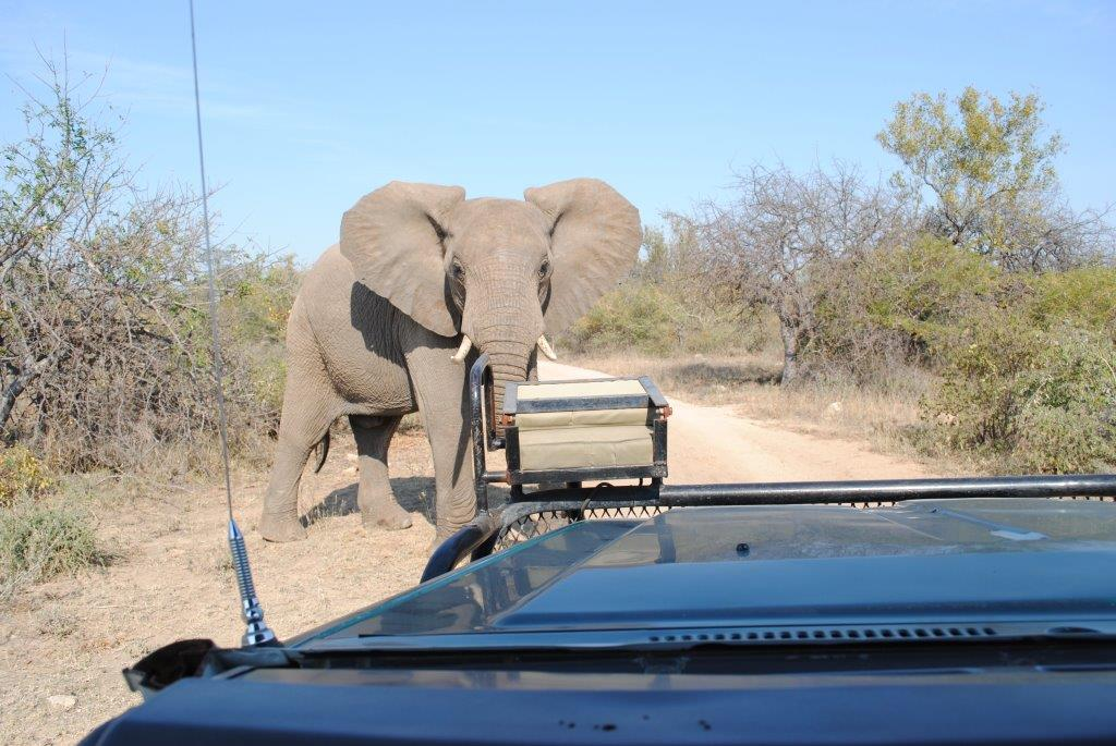 Safari in Südafrikas Greater Kruger Nationalpark