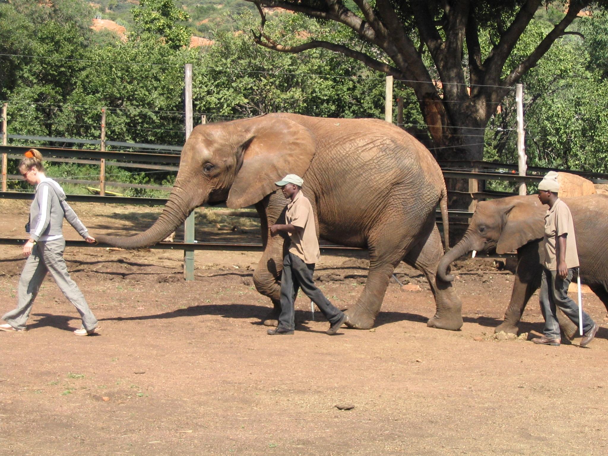 Südafrika: Tagestour zum Elefantenschutzzentrum bei Pretoria